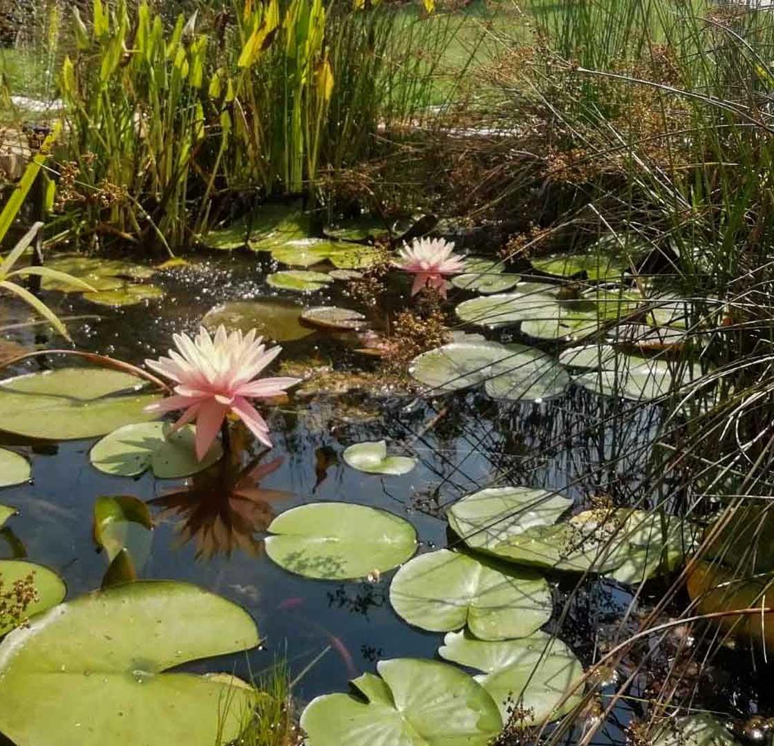 Laghetto naturale con piante acquatiche